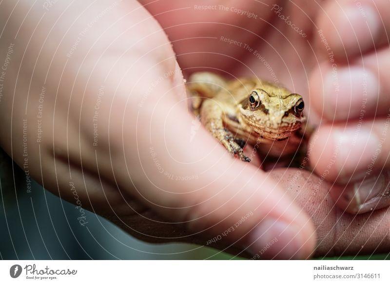 Grasfrosch in Hand wandern Kind Finger 8-13 Jahre Kindheit Umwelt Natur Tier Herbst Wald Wildtier Frosch Tiergesicht Tierjunges beobachten entdecken festhalten