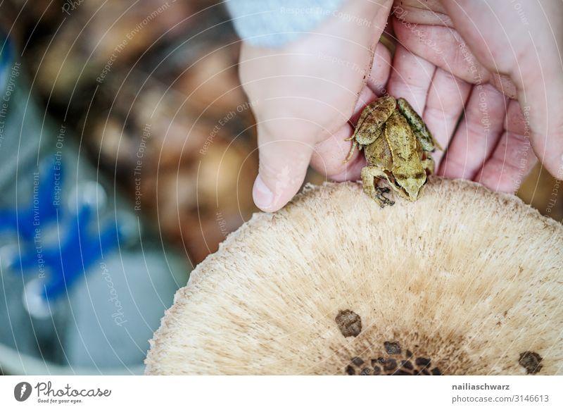 Im Wald Kind Mensch Pflanze schön Hand Tier Freude Herbst Umwelt natürlich Gefühle Zufriedenheit wandern Wildtier Kindheit