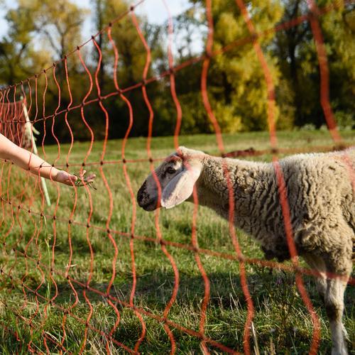Nahrungsangebot Kind Mensch Natur Sommer grün Hand Tier Mädchen Herbst gelb Wiese Gras braun Kindheit Arme Neugier