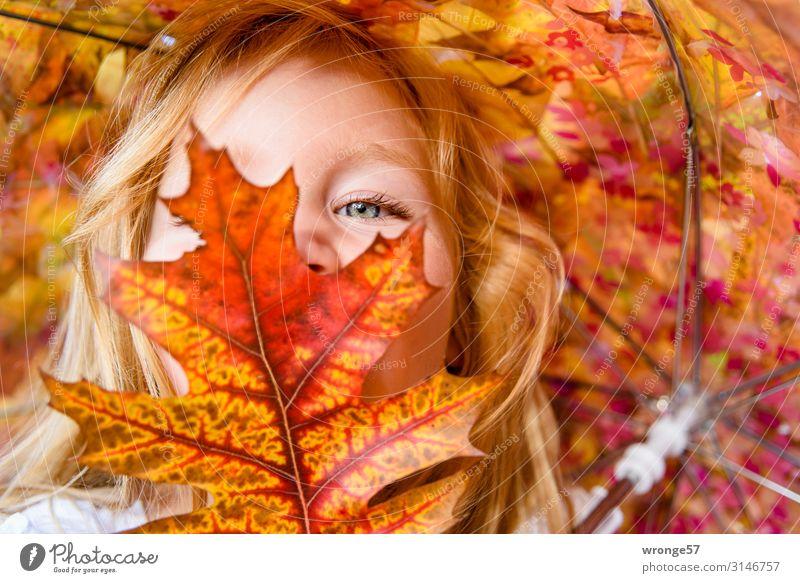 Mädchen hinter buntem Laub Kind Kleinkind Gesicht 1 Mensch 3-8 Jahre Kindheit Blick nah mehrfarbig gelb gold rot Porträt Herbst Herbstlaub Blatt Nahaufnahme