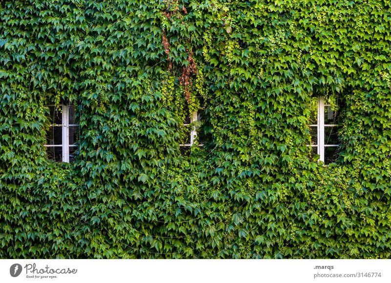Wildwuchs Natur Herbst Blatt Wilder Wein Fenster 3 viele grün bewachsen Wachstum Farbfoto Außenaufnahme Strukturen & Formen Menschenleer Textfreiraum oben