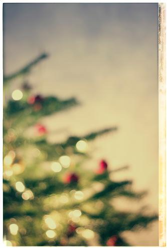 christmas tree, defocused Häusliches Leben Wohnung Innenarchitektur Dekoration & Verzierung Raum Wohnzimmer Feste & Feiern Weihnachten & Advent Baum