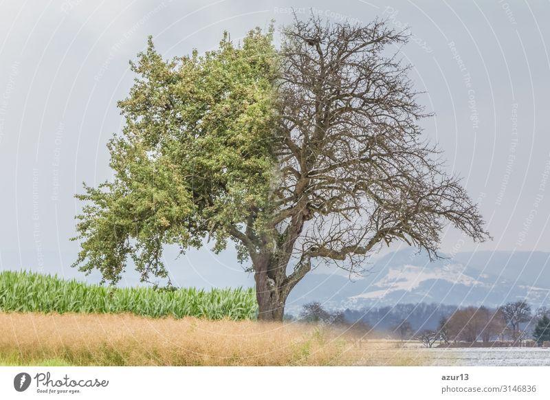 Climate change transition spring summer to winter time over year Leben Sommer Winter Natur Wärme springen verrückt Desaster climate weather global warming