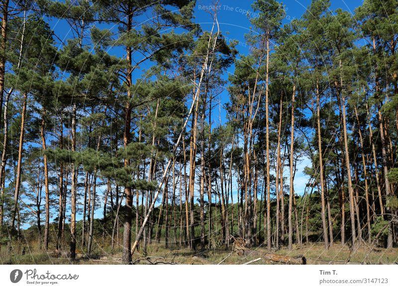 Brandenburg Himmel Natur Pflanze Landschaft Baum Wald Herbst Umwelt Schönes Wetter Umweltschutz