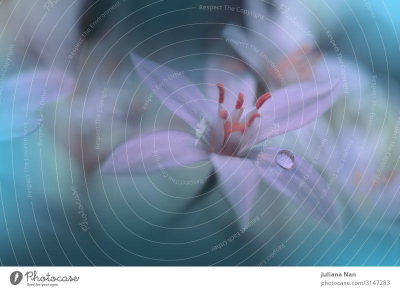 Grüner Naturhintergrund, Schönheit in der Natur, Makrofotografie. Lifestyle Reichtum Stil Design Freude Kunst Kunstwerk Pflanze Blüte Grünpflanze Wasser trendy