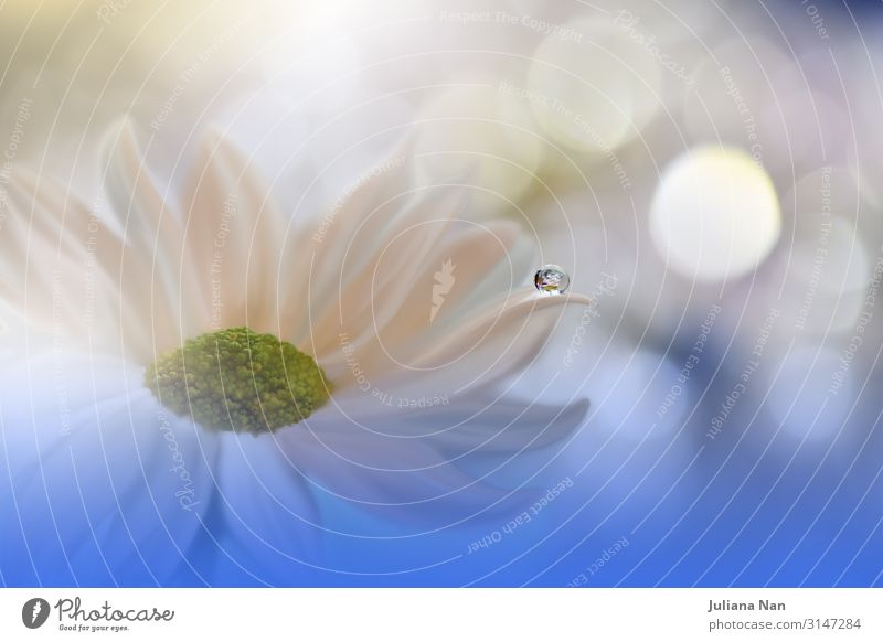 Weiße Gänseblümchenblume, Blumenkunstdesign, blauer Naturhintergrund. Lifestyle elegant Stil Design harmonisch Erholung ruhig Meditation Spa Hochzeit Kunst