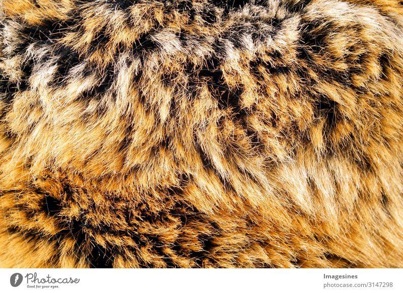 """Fell Umwelt Mode Bekleidung Tier Totes Tier Hintergrundbild kuschlig Verantwortung verschwenden Tierliebe Rettung Tod Tradition Überleben Umweltschutz """"echtpelz"""