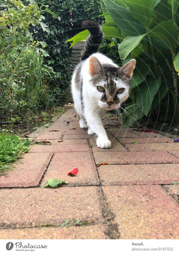 Mäusejagd Tier Haustier Katze Fell Pfote 1 Stein Fährte beobachten gehen Jagd authentisch Frühlingsgefühle Mut Vertrauen Geborgenheit Tierliebe Treue achtsam