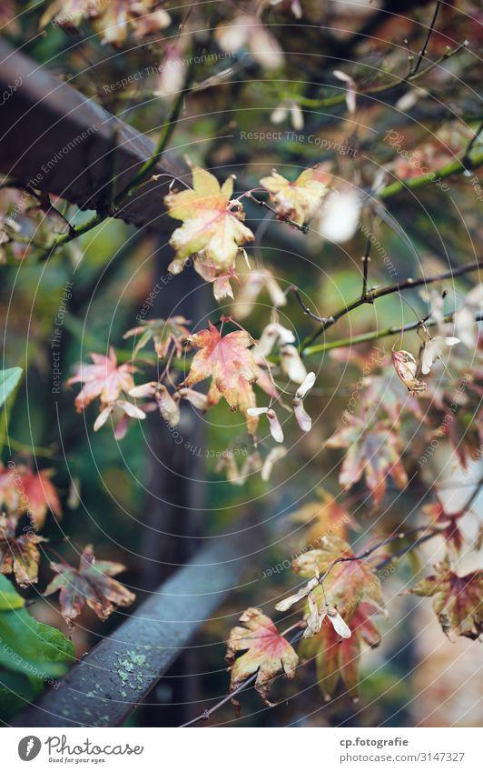 Jenseits des Sommers Natur Pflanze Herbst Baum Sträucher Grünpflanze Flechten Garten Zaun Stahl alt authentisch eckig Stadt trist Farbfoto Gedeckte Farben