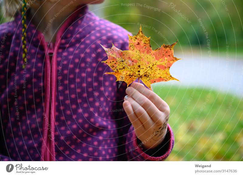 Herbstfund Mensch feminin Mädchen Kindheit 1 3-8 Jahre 8-13 Jahre Blatt kalt Akzeptanz Vertrauen Traurigkeit Sorge Trauer Tod Farbfoto Außenaufnahme