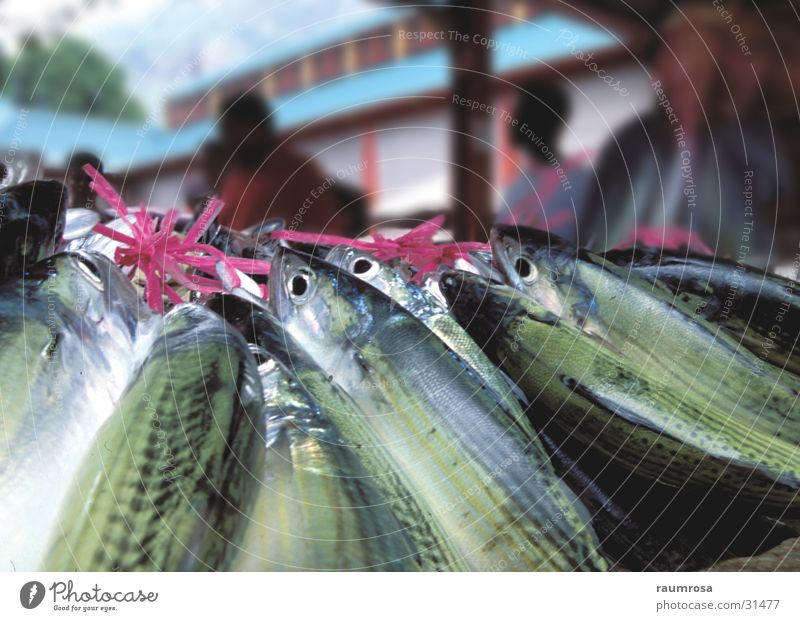 Catch of the day Sri Lanka Colombo Markt Fisch Ernährung Detailaufnahme