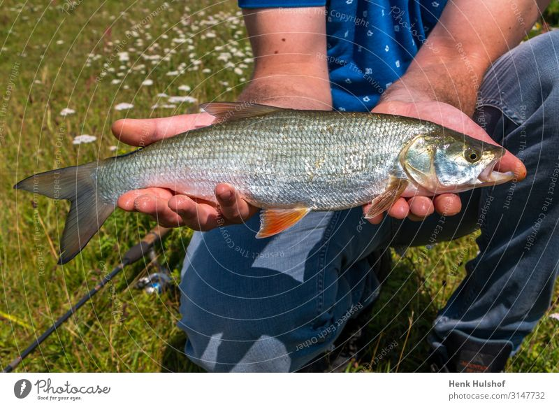 Fang von Rapfen im Fluss Sport Mensch Körper Brust Arme 1 18-30 Jahre Jugendliche Erwachsene Umwelt Natur Wasser IJssel Tier Fisch Aspis blau grün silber Erfolg