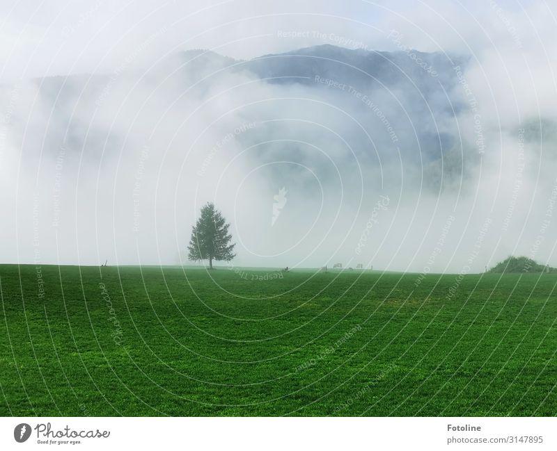 einsam Umwelt Natur Landschaft Pflanze Himmel Wolken Herbst Nebel Baum Gras Park Wiese Alpen Berge u. Gebirge natürlich grün weiß Einsamkeit Tanne Österreich