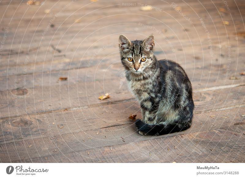 Tabby-Katze mit auf Holzkammer Spielen Jagd Yoga Tier Pelzmantel Haustier Pfote Spielzeug hell klein lustig niedlich grau rot Einsamkeit heimisch eine fluffig
