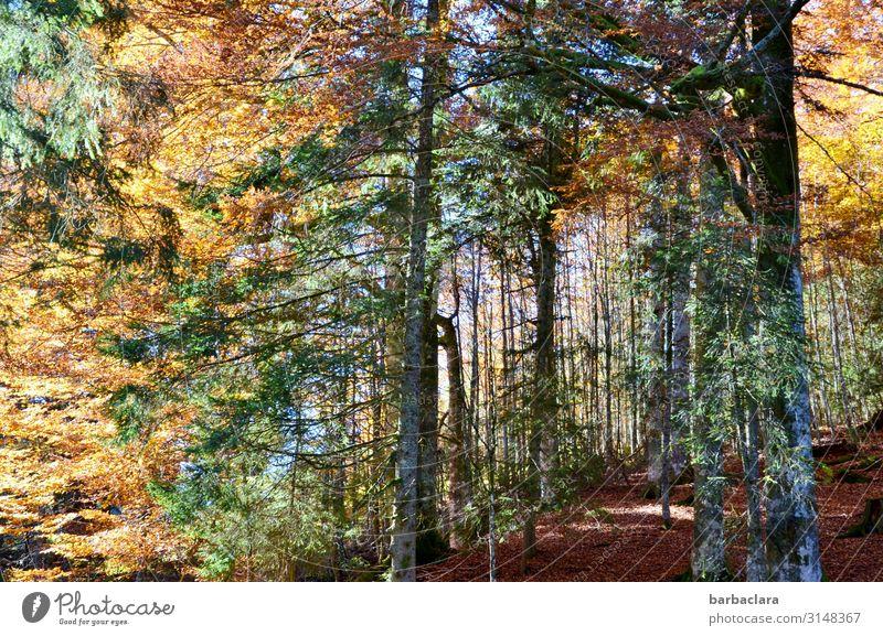 Herbstwald Natur Pflanze Farbe grün Landschaft rot Sonne Baum Erholung Blatt Wald Umwelt Stimmung Freizeit & Hobby leuchten