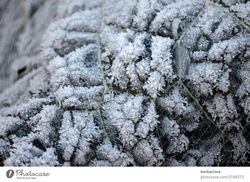 Eiszeit | gefrorenes Gartengemüse Gemüse Kohl Pflanze Winter Klima Frost Schnee Blatt Nutzpflanze kalt Natur Umwelt Wandel & Veränderung Farbfoto