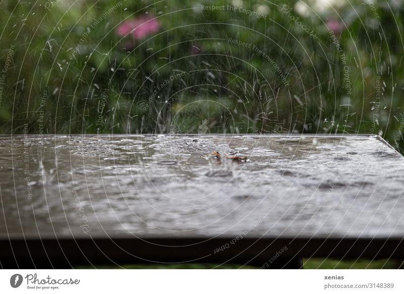 Tisch mit Regentropfen im Garten Wasser Wassertropfen Frühling Sommer Klima Wetter schlechtes Wetter Grünpflanze Park nass braun grün rosa spritzen Nahaufnahme