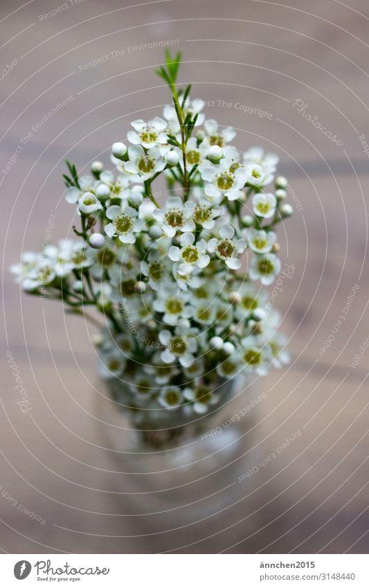 weiße Wachsblumen Blume Blüte Vase schön grün Natur Innenaufnahme Dekoration & Verzierung Blumenstrauß Geschenk Liebe Hochzeit Frühling Sommer Romantik Holz