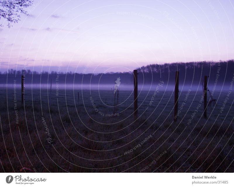 Morgengrauen in blau dunkel Nebel Weide