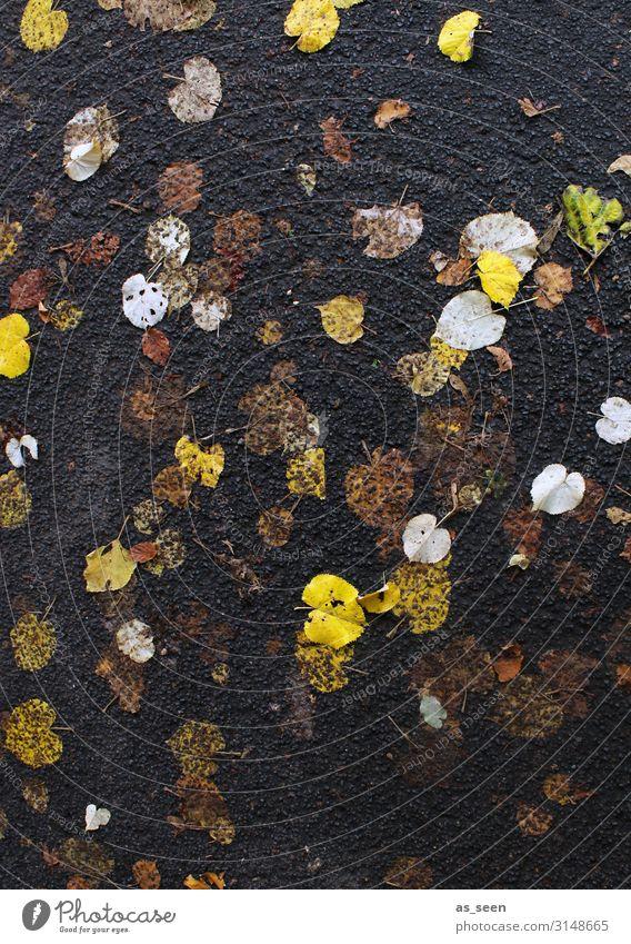 Herbstgold Halloween Umwelt Natur Pflanze schlechtes Wetter Regen Blatt Herbstlaub Park Straßenbelag Teer Wege & Pfade leuchten liegen authentisch nass