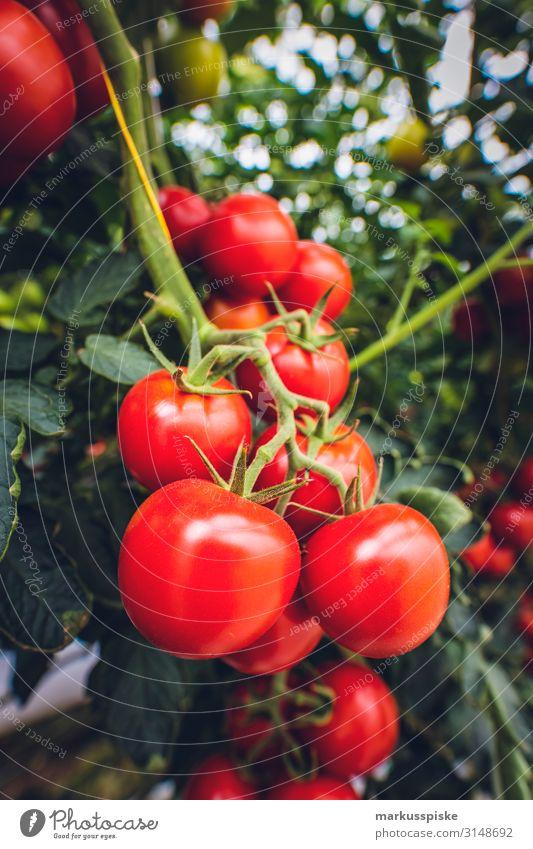 Mega Glasshouse for Tomatoes and Pepper Lebensmittel Gemüse Ernährung Essen Picknick Bioprodukte Vegetarische Ernährung Diät Fasten Slowfood Gesundheit