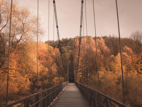 Herbstbrücke Natur Wetter Schönes Wetter Baum Blatt Park Kleinstadt Brücke Architektur Coolness hell schön Originalität gelb orange Farbe Erde Gedeckte Farben