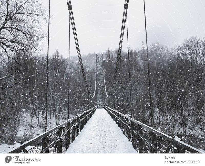 Winterbrücke Umwelt Natur Klima Wetter Schnee Schneefall Baum Park Kleinstadt Brücke Metall Stahl Coolness fantastisch schön natürlich Originalität grau schwarz