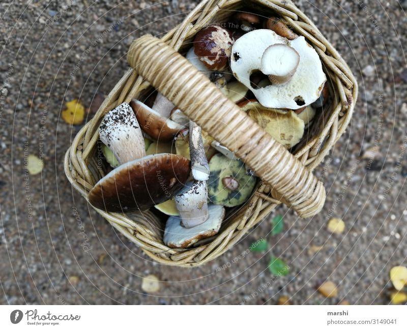Pilze sammeln Natur Pflanze Wald Lebensmittel Essen Stimmung Ernährung kochen & garen Tradition Sammlung Korb Waldrand Steinpilze