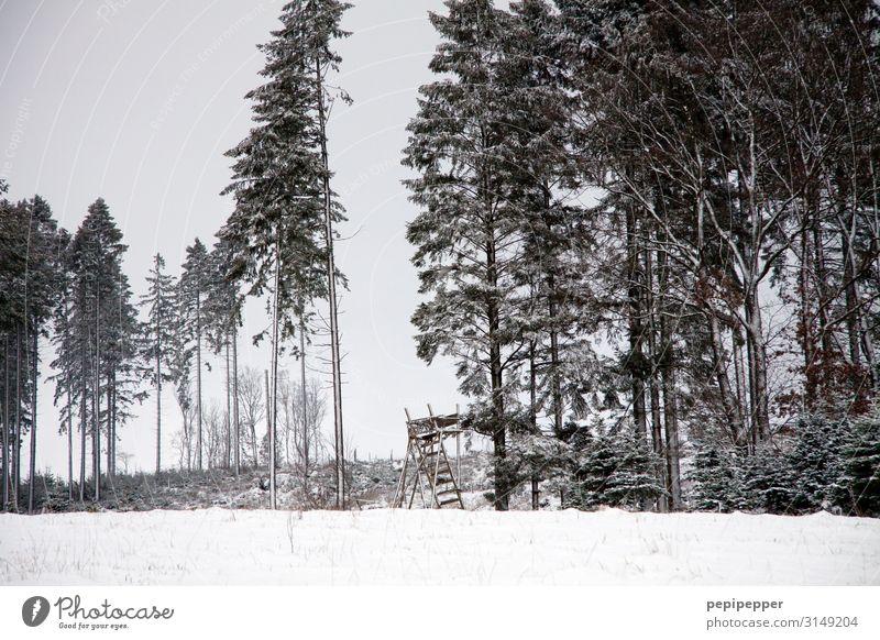 Hochsitz Freizeit & Hobby Jagd Ausflug Abenteuer Winter Schnee Jäger Arbeitsplatz Landwirtschaft Forstwirtschaft Landschaft Baum Feld Wald Hügel Hütte Holz