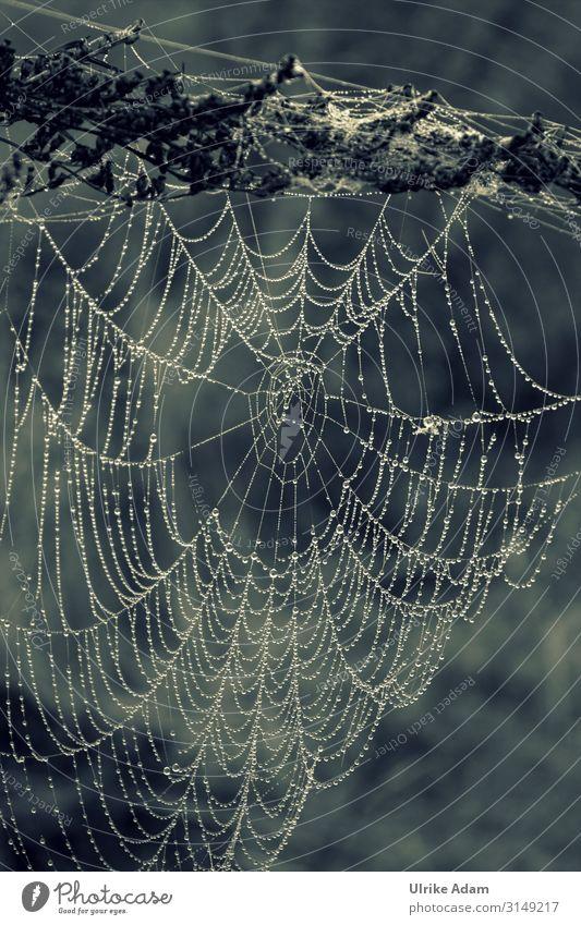 Kunstwerk - Spinnennetz im Morgentau Monochrom Tropfen Perlen Netz Natürlich Natur Tau Wassertropfen Außenaufnahme Nahaufnahme Makroaufnahme Detailaufnahme nass