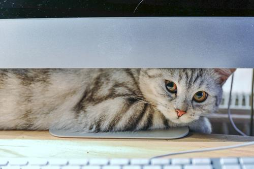 Katze Computer Tastatur Technik & Technologie Tier Haustier 1 Zufriedenheit Freundschaft Häusliches Leben Farbfoto Innenaufnahme Menschenleer Textfreiraum oben