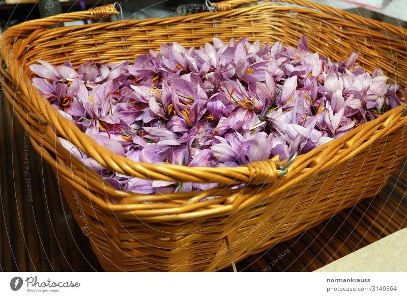 frisch geerntete Safranblüten in einem Korb Kräuter & Gewürze Pflanze Blume Duft Gesundheit natürlich violett Blüte Ernte Farbfoto Innenaufnahme Menschenleer