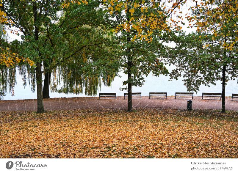 Herbst hanseatisch Umwelt Natur Pflanze Wasser Baum Blatt Park Seeufer Alster Hamburg Stadt Hafenstadt Stadtzentrum Erholung dehydrieren natürlich Gefühle