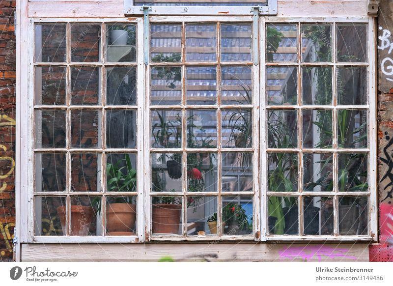 Wintergarten / Hamburg 10|19 Natur alt Pflanze Stadt Haus Freude Fenster Häusliches Leben Ausflug dreckig Idylle Abenteuer verrückt Armut Blühend einzigartig