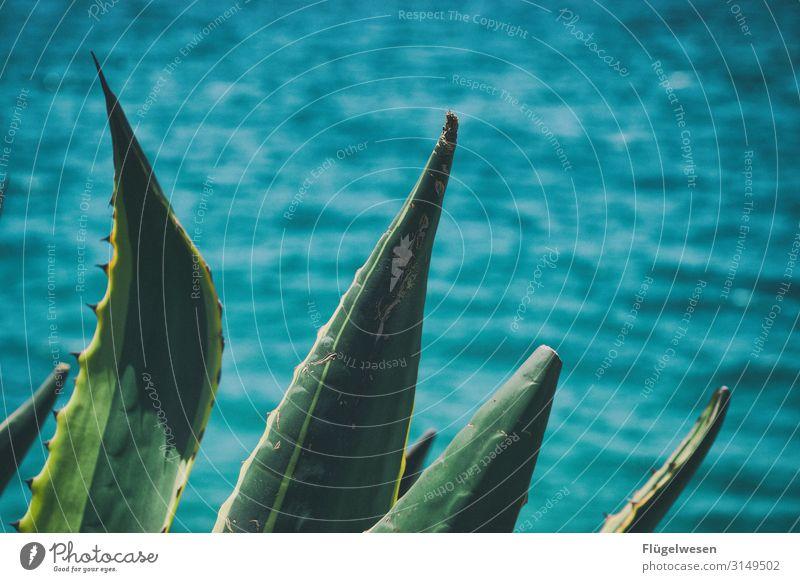 stachelig Stachelige Kratzdistel Kaktus Kakteen Kakteenblüte Kakteenstacheln Kaktusfeige Kaktusfeld Meer