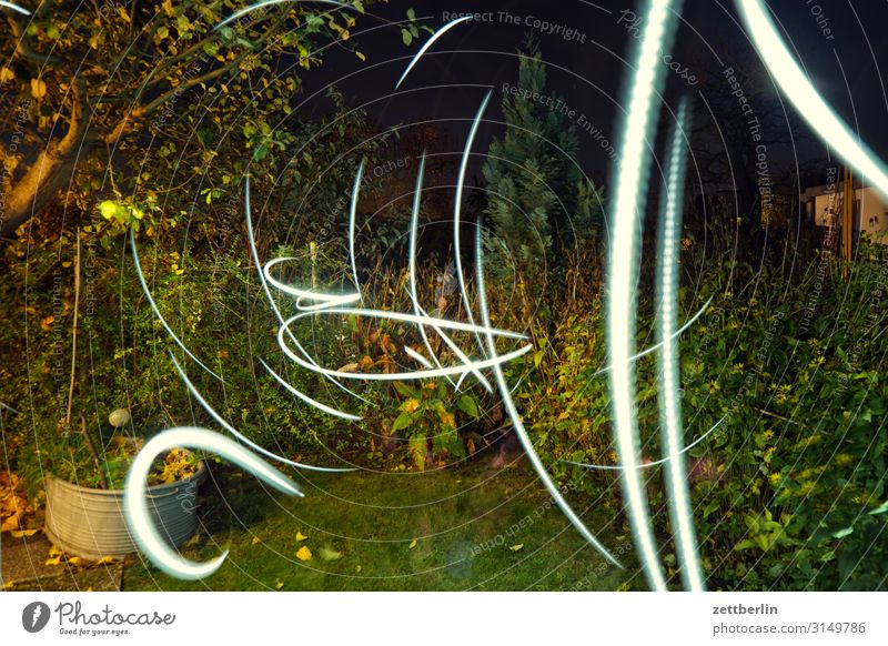 Irrlichter im Garten Ast Gras Herbst Schrebergarten Kleingartenkolonie Herbstlaub Menschenleer Natur Pflanze Rasen Sträucher Textfreiraum Tiefenschärfe Wiese