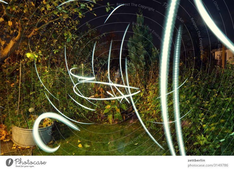Irrlichter im Garten Natur Pflanze dunkel Herbst Wiese Gras Textfreiraum Sträucher Ast Rasen Schrebergarten Zweig Tiefenschärfe Blitze Herbstlaub