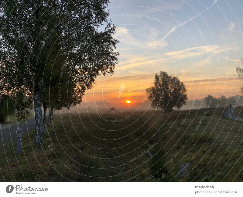 Sonnenaufgang im Nebel - Natur Baum Silhouette Wellness harmonisch Wohlgefühl Zufriedenheit Sinnesorgane Erholung Meditation Umwelt Landschaft Himmel Herbst
