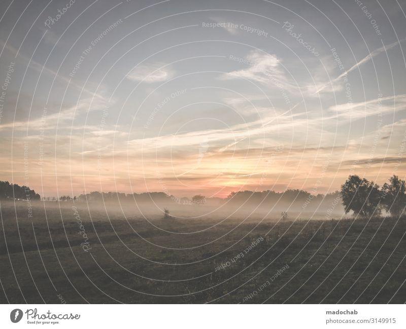 Sonnenaufgang im Nebel Umwelt Natur Landschaft Pflanze Himmel Sonnenuntergang Herbst Klima Wetter Baum Romantik achtsam ruhig Sehnsucht Beginn Zufriedenheit