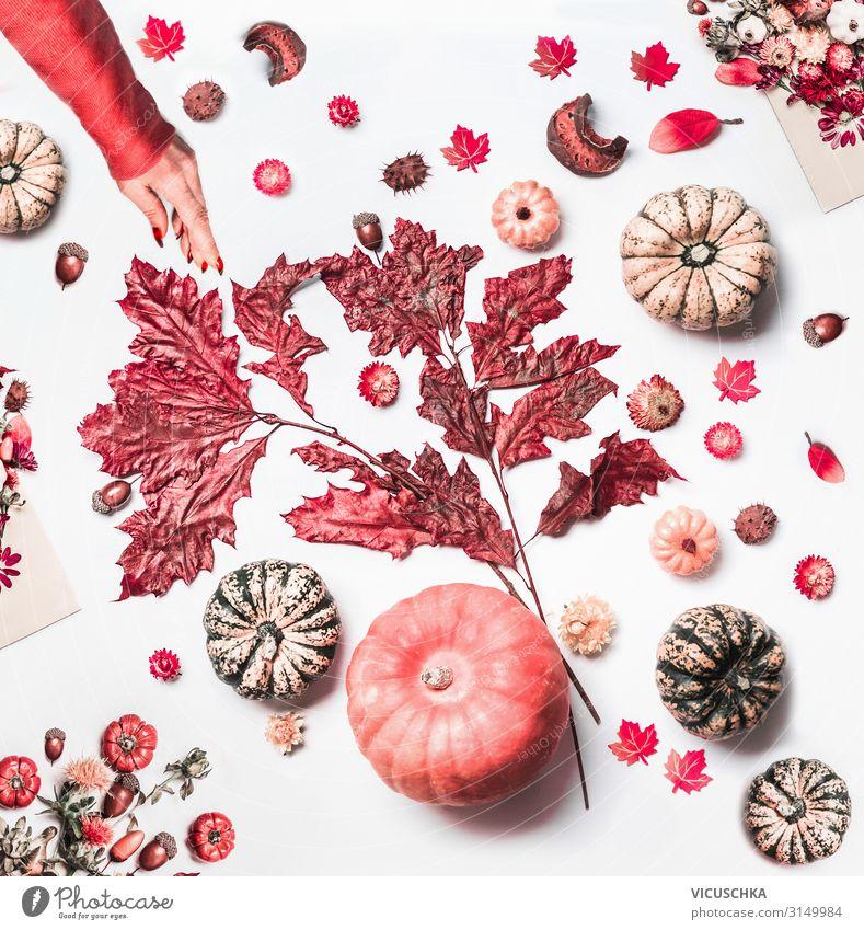 Frauenhand macht Herbst Arrangement Stil Design Tisch Erwachsene Hand Natur Blatt Blüte Dekoration & Verzierung Blumenstrauß arrangiert Hintergrundbild Blog