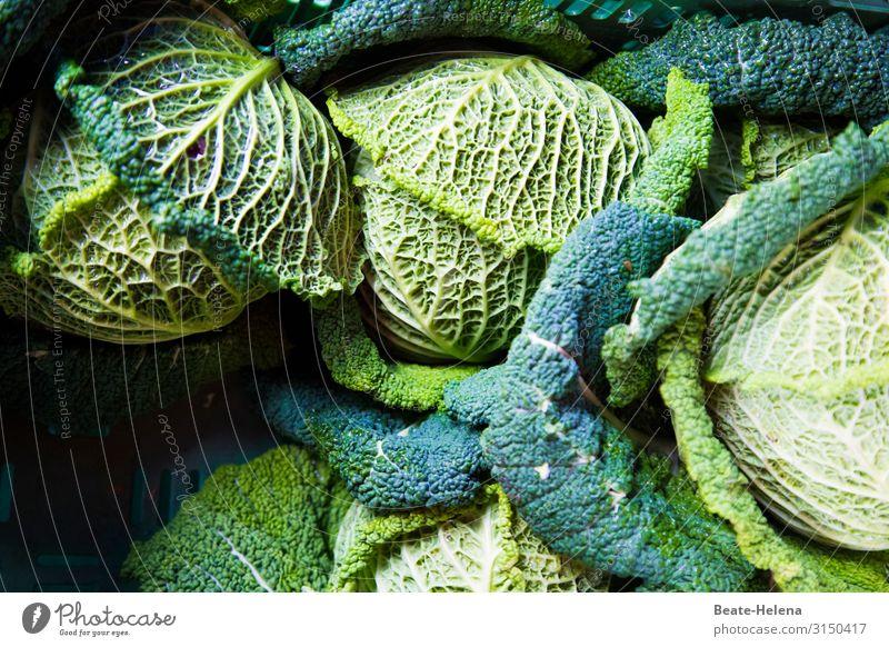 Wintergemüse Wirsing vegetarisch gesund vegan Blattadern Gemüse frisch Ernährung Lebensmittel lecker Bioprodukte Vegetarische Ernährung Gesunde Ernährung