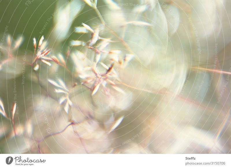 Firlefanz   Gräser Natur Sommer Pflanze schön grün Umwelt natürlich Wiese Bewegung Gras Garten hell wild Wind viele nah