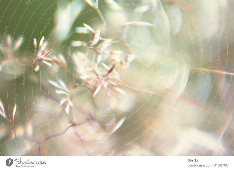 Firlefanz   Gräser Umwelt Natur Sommer Wind Pflanze Gras Wildpflanze Grasbüschel Garten Wiese hell nah natürlich schön viele grün Bewegung Leichtigkeit Windböe