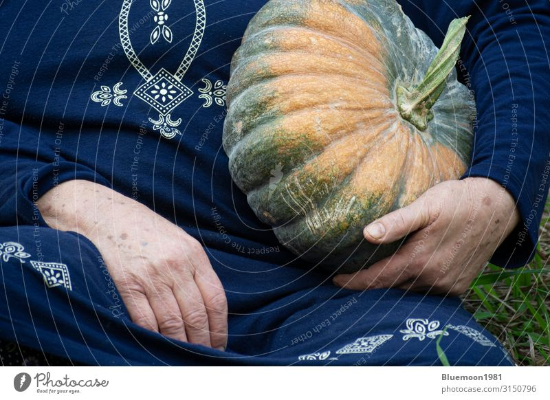 Detailaufnahme einer älteren Hand, die einen Kürbis in der linken Hand hält. Gemüse Frucht Vegetarische Ernährung Lifestyle Gesunde Ernährung Freizeit & Hobby