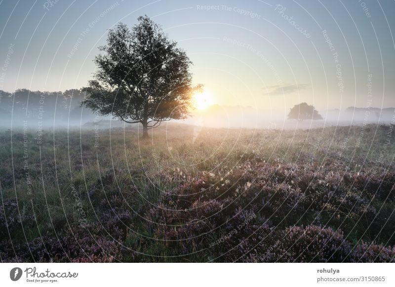 ruhiger, schöner, nebliger Sonnenaufgang über Heidegebiet Natur Landschaft Pflanze Sonnenuntergang Herbst Nebel Baum Blume Wiese Wald wild rosa Gelassenheit