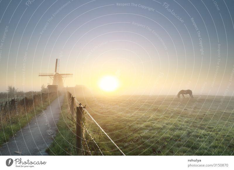 nebliger goldener Sonnenaufgang mit grasendem Pferd und Windmilch ruhig Sommer Landschaft Horizont Sonnenuntergang Nebel Gras Wege & Pfade Fressen Gelassenheit