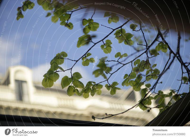 Busfahrt Ferien & Urlaub & Reisen Himmel Pflanze Niederlande Haus Dach Kunststoff Blick blau grün weiß Gefühle genießen Farbfoto Menschenleer Tag