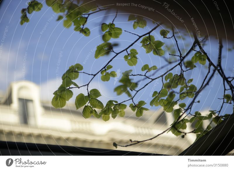 Busfahrt Himmel Ferien & Urlaub & Reisen Pflanze blau grün weiß Haus Gefühle genießen Dach Kunststoff Niederlande