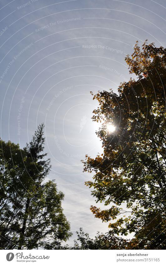 Sonnenschein im Herbst zwischen grünen Bäumen Natur Pflanze Himmel Sommer Schönes Wetter Baum Grünpflanze Erholung wandern authentisch Fröhlichkeit frisch