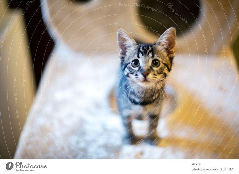 Emmy Katze Tier Tierjunges klein authentisch niedlich Neugier Haustier Tiergesicht unschuldig